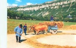 Fetes De La Moisson - Depiquage Au Rouleau Attelage Boeufs   B 581 - Cultivation