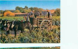 Scene Typique De Vendange Attelage Cheval  B 656 - Vines