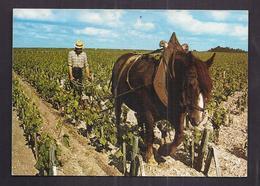 CPSM AGRICULTURE - VIGNE VIN - Les Soins De La Vigne - Le Labourage Entre Les Rangs De Vigne - TB PLAN ATTELAGE CHEVAL - Vines