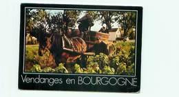 Vendanges En Bourgogne  Attelage De Cheval    B 673 - Teams