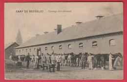 Kamp Van Beverloo - Pansage Des Chevaux - 1912 ( Verso Zien ) - Houthalen-Helchteren