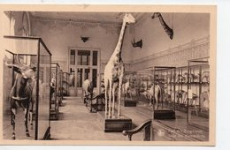 Tervuren (Belgique) Koninklijk Museum Van Belgish-Congo  (PPP16792) - Cambodia