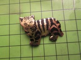 516a Pin's Pins / Beau Et Rare / THEME ANIMAUX : CHATON CHAT TIGRé - Animales