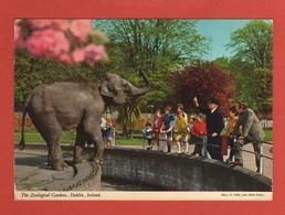 CP43 EUROPE IRLANDE DUBLIN 280 Zoological Garden - Dublin