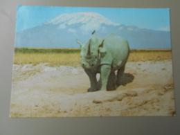 TANZANIE RHINO AT MT. KILIMANJARO  KENSTA WILDLIFE SERIES - Tanzanie