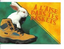 HUMOUR  / Chaussure Et Lapin Blanc :  A L'AISE DANS TES BASKETS / CPM écrite Non Datée / Comme Neuve / Valoire-Estel - Humor