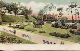 Old Colour Postcard, China, Hongkong, Botanical Gardens. - Chine (Hong Kong)