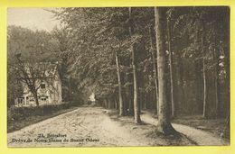 * Boitsfort - Watermaal Bosvoorde (Bruxelles) * (Photo Belge Lumière, Nr 23) Drève De Notre Dame De Bonne Odeur, Bois - Watermael-Boitsfort - Watermaal-Bosvoorde
