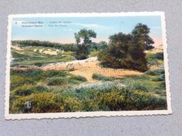 Nieuport Coin Des Dunes - Cartes Postales