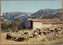 PROVENCE - Lot De 5 Cartes : Scènes Pastorales, Moutons, Bergerie, Transhumance - Elevage