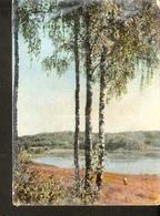 K. USSR Soviet Latvia Latvian SSR The Lake SALEZERS Photo By V. Upitis - Nature Birch Lake Coast Bank - Latvia