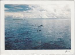 BANGRAM ATOLL India,  Pod Of DOLPHINS Against Bangaram, Princess Royal Reef;  Giant Format,  Nice Stamp - Dolphins