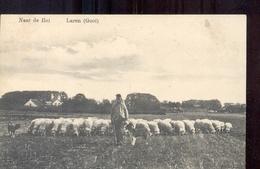 Laren - Schapen - 1911 - Laren (NH)
