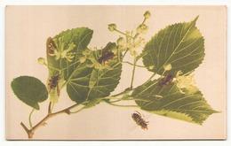 ABEILLES ET FLEURS - Insectes