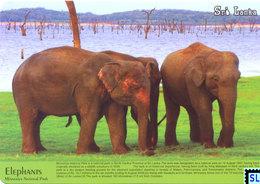 Sri Lanka Postcards, Minneriya National Park, Elephants, Postcrossing - Sri Lanka (Ceylon)