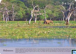 Sri Lanka Postcards, Habarana, Elephants, Postcrossing - Sri Lanka (Ceylon)