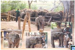 Sri Lanka Postcards, Udawalawe Elephant Transit Home, Elephants, Postcrossing - Sri Lanka (Ceylon)