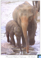 Sri Lanka Postcards, Pinnawala Elephant Orphanage, Elephants, Postcrossing - Sri Lanka (Ceylon)