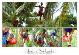 Sri Lanka Postcards, Toddy Tapper, People, Postcrossing - Sri Lanka (Ceylon)