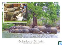 Sri Lanka Postcards, Udawalawe, Elephants, Postcrossing - Sri Lanka (Ceylon)