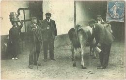 Dépt 64 - PAYS BASQUE - Scène D'achat D'une Vache - M. D. N° 316 - (thème Du Lait) - France