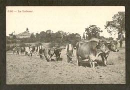 CP-AGRICULTURE - Le Labour - Attelages