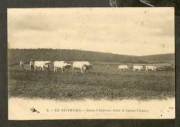CP-AGRICULTURE - Deux Charrues Dans Le Même Champ - En Nivernais - Attelages