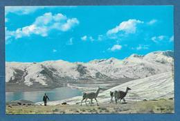 BOLIVIA CORDILLERA DE LOS ANDES UNUSED - Bolivia