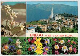 ENEGO  Mt. 800   E  LA  SUA  FLORA           (VIAGGIATA) - Italia