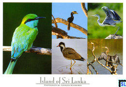 Sri Lanka Postcards, Yala National Park, Birds, Postcrossing - Sri Lanka (Ceylon)