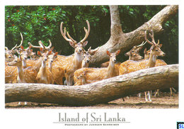 Sri Lanka Postcards, Yala National Park, Deer, Postcrossing - Sri Lanka (Ceylon)