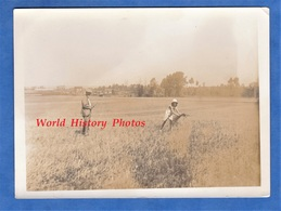 Photo Ancienne Snapshot - LA TAYE - Homme & Jeune Fille Dans Un Champ - 12 Aout 1933 - Saint Georges Sur Eure - Places