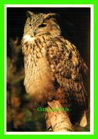 HIBOU - PHILIPPINE OWL - - Oiseaux