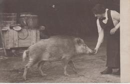 CP Photo Nourrissage D'un Sanglier à La Main (belle Scène) - Viehzucht