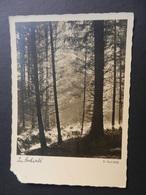19855) CARTOLINA ARTISTICA FOTOGRAFICA IM HOCHWALD PAUL WOLFF NON VIAGGIATA ANGOLO DIFETTOSO - Photographie