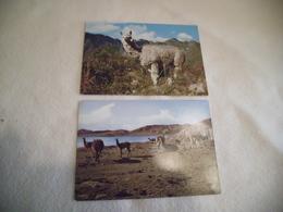 LOT DE 2 CARTES ...........LA VIUDA ....ET ALPACA EN LA SIERRA..LAMAS - Peru