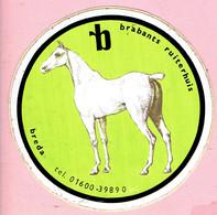 Sticker - Brabants Ruiterhuis Breda - Wit Paard - Autocollants