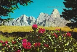 Dolomiti - Passo Rolle M. 1984 - Cimon Delle Pale M. 3186 - Italia