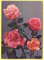 Tematica - Fiori - Rose - Mazzo Di Rose - Heureux Anniversaire - Wrote But Not Sent - Roses