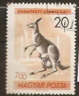 Hungary  1961  SG 1716  Budapest Zoo  Kangaroo Fine Used - Hongrie