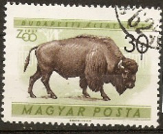 Hungary  1961  SG 1717  Budapest Zoo  American Bison  Fine Used - Hongrie