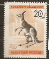 Hungary  1961  SG 1718  Budapest Zoo  American Brown Bear   Fine Used - Hongrie