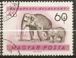 Hungary  1961  SG 1719  Budapest Zoo  African Elephant    Fine Used - Hongrie