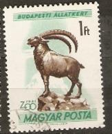 Hungary  1961  SG 1721  Budapest Zoo Ibex   Fine Used - Hongrie