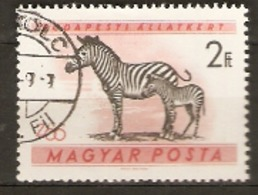Hungary  1961  SG 1723  Budapest Zoo Zebra  Fine Used - Hongrie