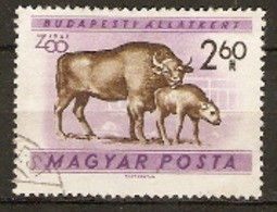 Hungary  1961  SG 1724  Budapest Zoo European Bison  Fine Used - Hongrie