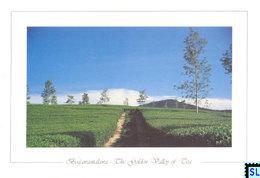 Sri Lanka Postcards, Tea Estate, Bogawantalawa, The Golden Valley Of Tea, Postcrossing - Sri Lanka (Ceylon)
