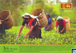Sri Lanka Postcards, Tea Pluckes, Nuwaraeliya, Postcrossing - Sri Lanka (Ceylon)