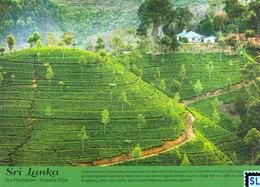 Sri Lanka Postcards, Tea Plantation, Nuwaraeliya, Postcrossing - Sri Lanka (Ceylon)
