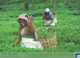 Sri Lanka Postcards, Tea Pluckers, Nuwaraeliya, Postcrossing - Sri Lanka (Ceylon)
